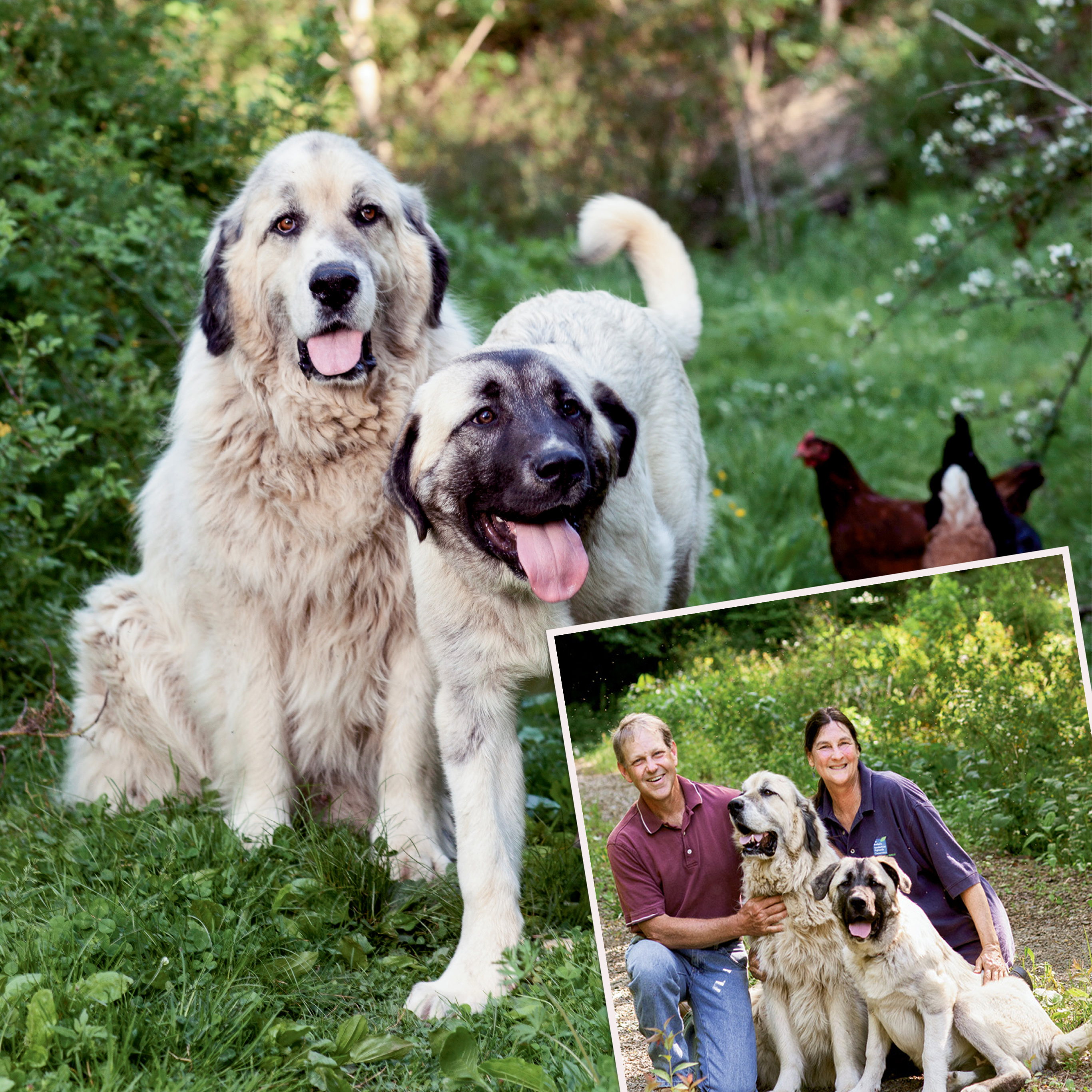 Top Dogs | WNC Magazine