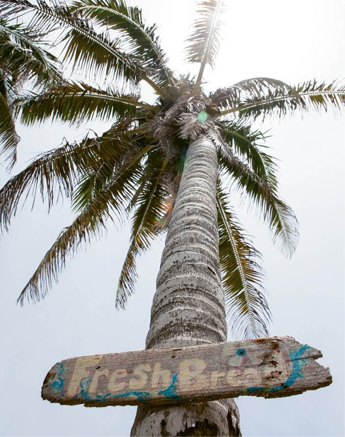 On Elbow Cay, businesses are marked not by addresses but signs nailed to trees