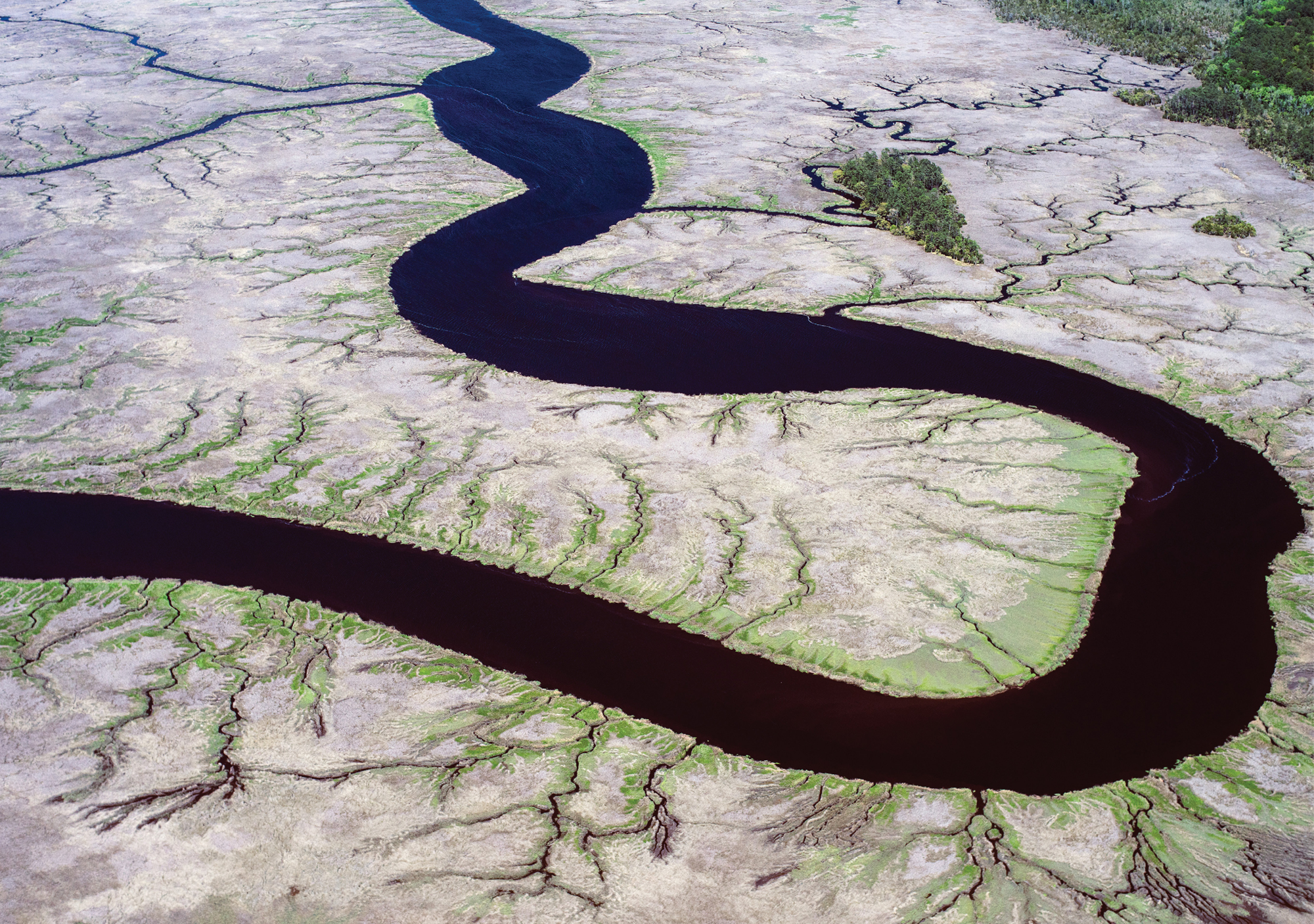 Wetlands in Spring with Fresh Green Growth (New River near Daufuskie Island; April 9, 2015)