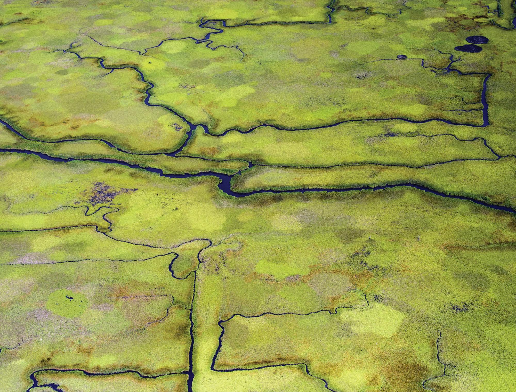Coastal Wetlands at Tom Yawkee Wildlife Preserve  (Georgetown; July 2, 2015)