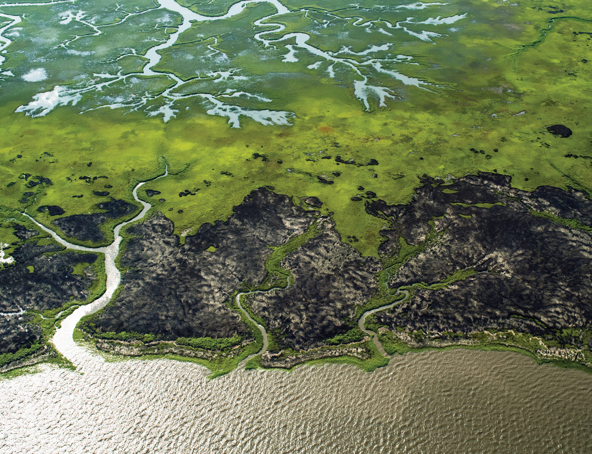 Coastal Wetlands Meet the Ocean (Winyah Bay National Estuarine Research Reserve; July 2, 2015)