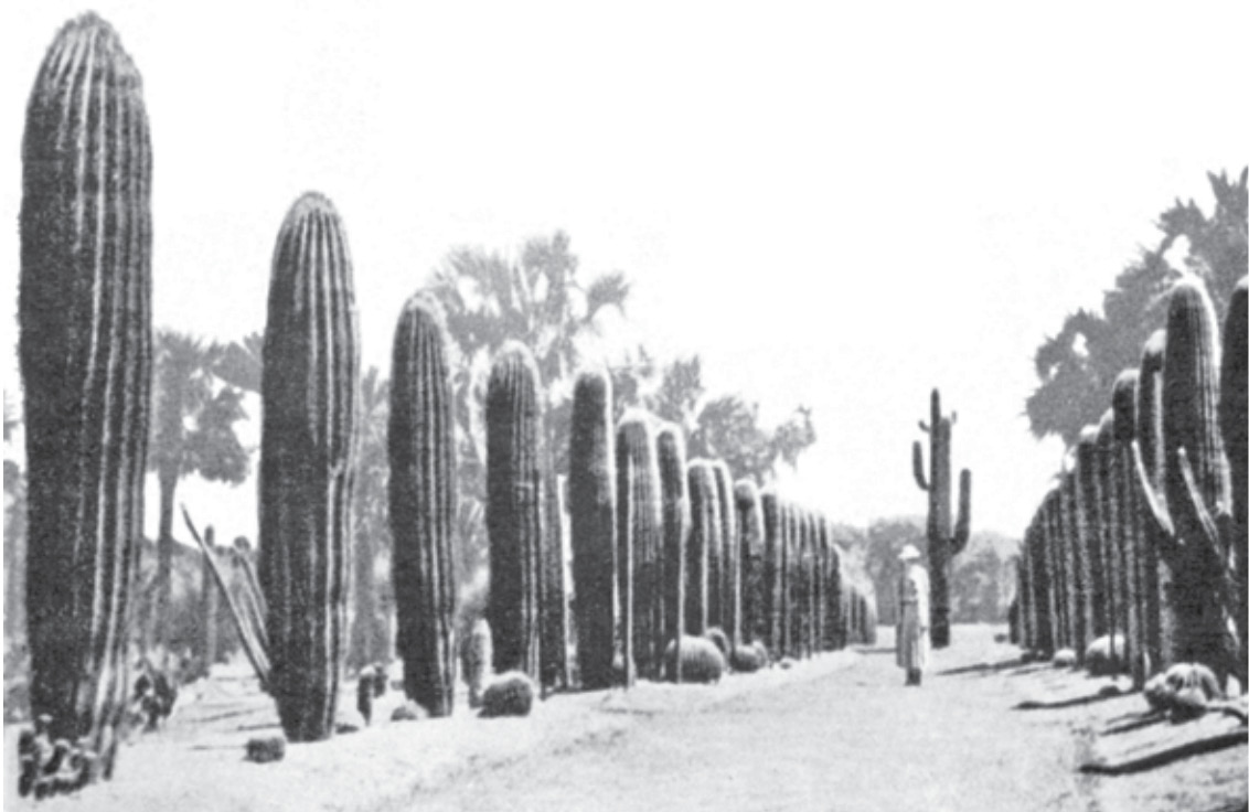 ...and especially the unique cactus garden, one of the largest private collections of cacti in the world.