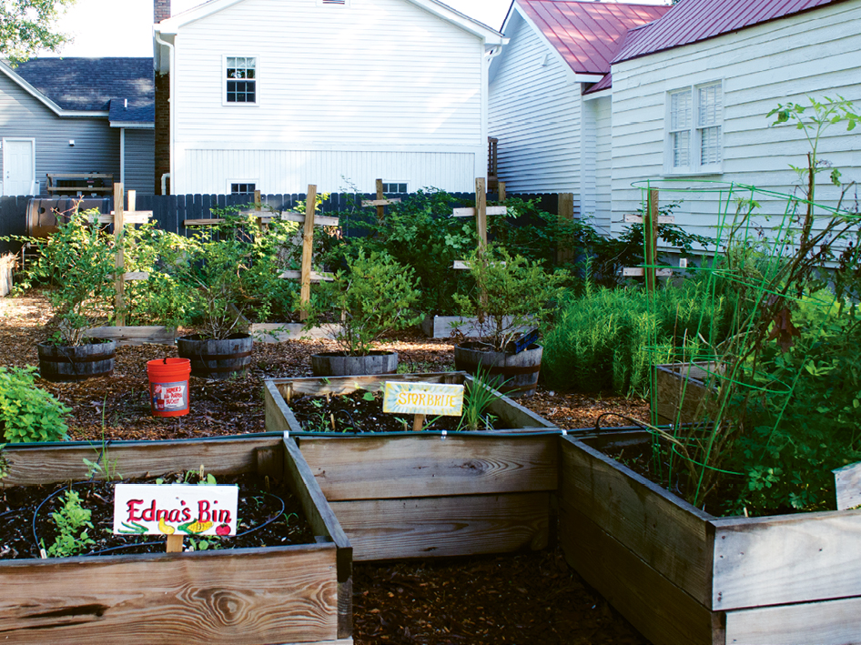 An early-autumn view of veggie-filled beds at Romney Urban Garden