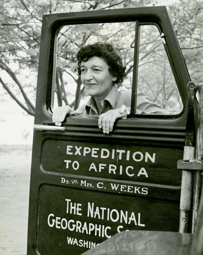 Gertie during her National Geographic expedition to Africa in 1952 (the name Weeks refers to her brief marriage to Dr. Carnes Weeks)