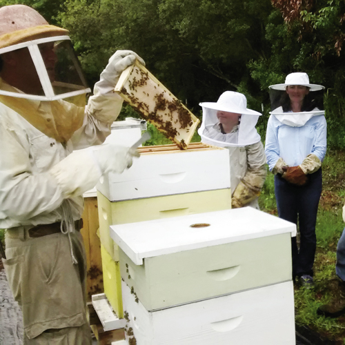 A beekeeping class at Blue Pearl Farms