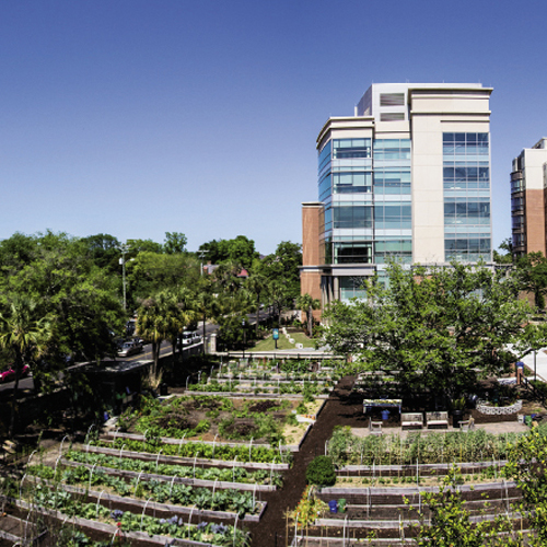 MUSC Urban Farm at Bee and President streets