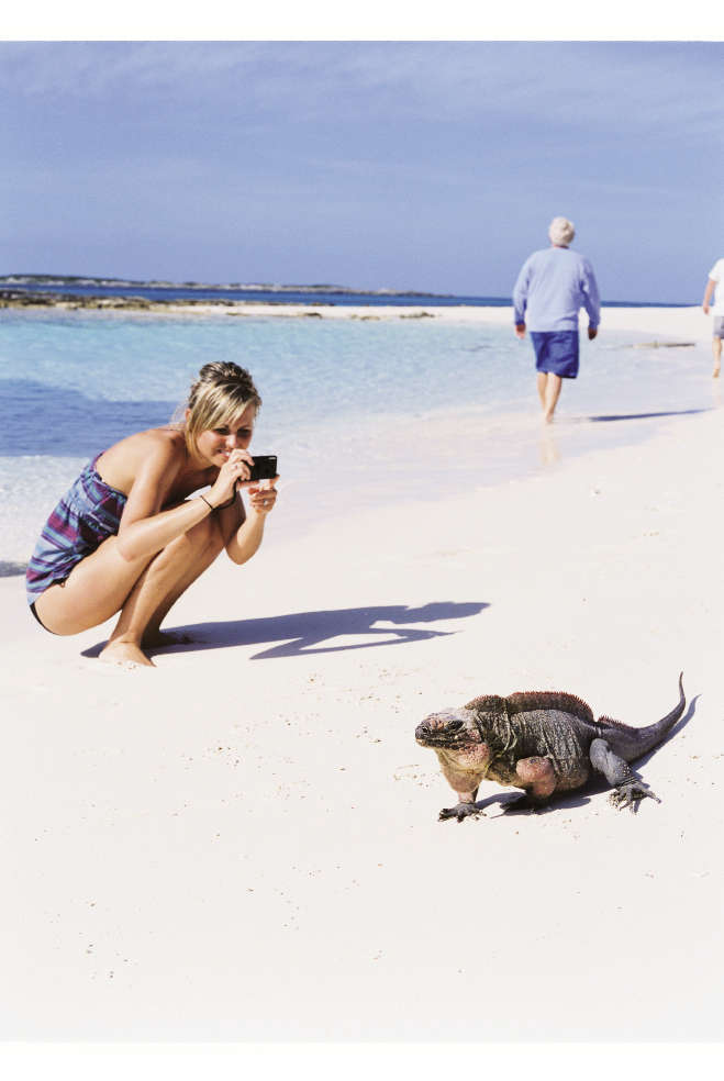 Getting a close-up view of a Bahamian rock iguana