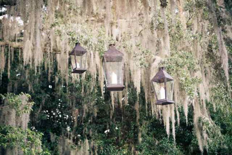 HANGING OUT: Lanterns from Loluma dangled from the venue's giant oaks.