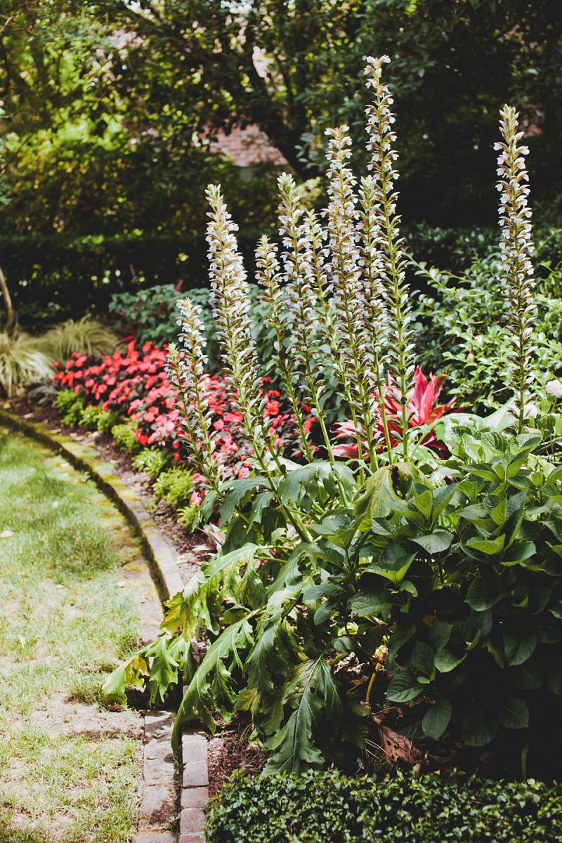 LUSH LAYERS: The Governor Thomas Bennett House's yard featured an abundance of plants and flowers, providing natural beauty to the reception's décor.