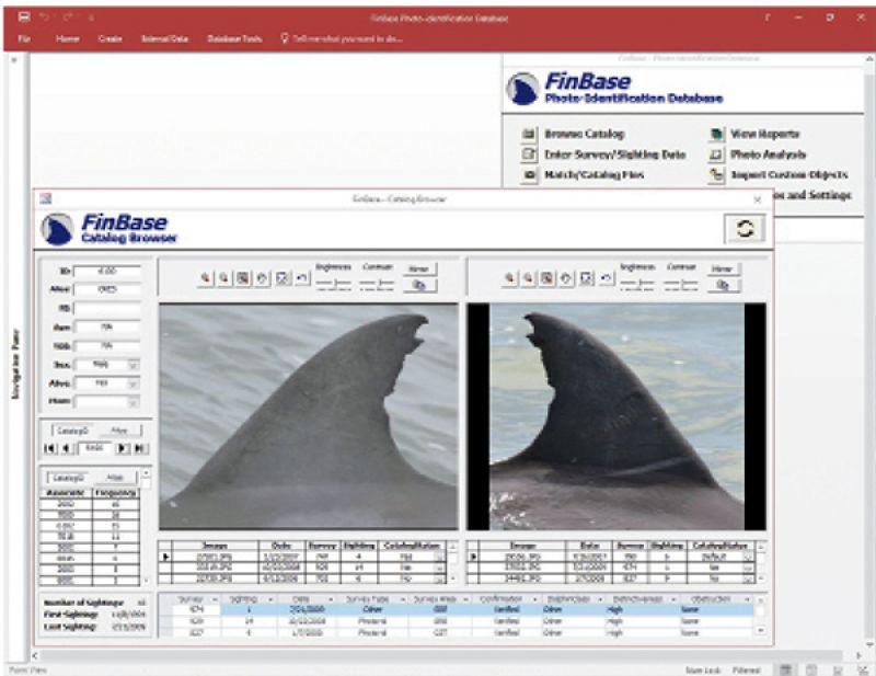 FinBase database