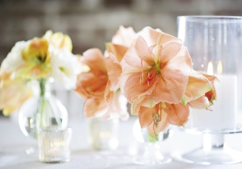KEEP IT SIMPLE: To maintain the simply colored tablescape, Heather Barrie of Gathering placed small bouquets of coral amaryllis and lisianthus with parrot tulips near white candles in clear glass vases.