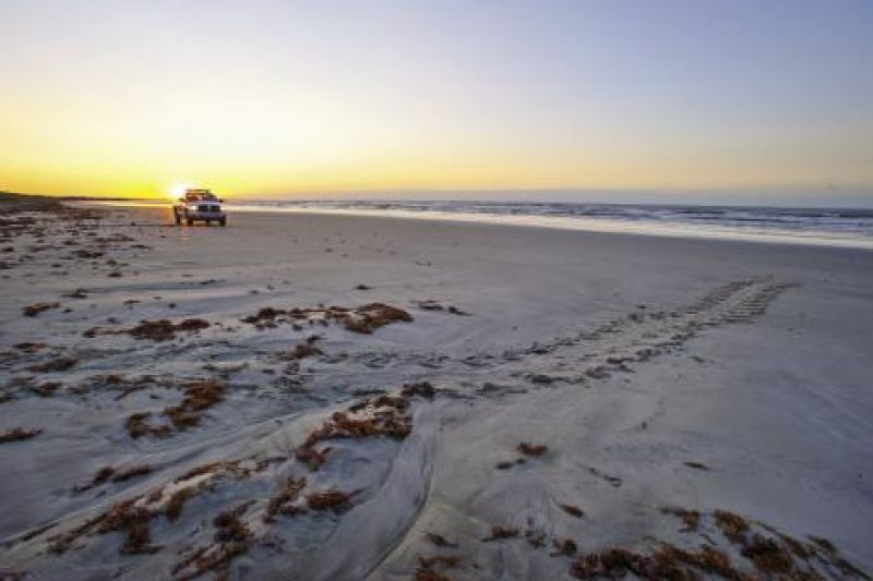 Turtle teams and DNR patrols scan beaches along the South Carolina coast every morning from May through October, searching for signs that a nesting loggerhead has made her maternal nocturnal trek.