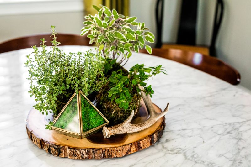 Grow kitchen herbs in moss balls, and use them to create a table centerpiece.