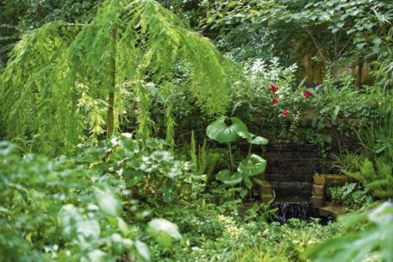 "The garden's ""weeping wall"""