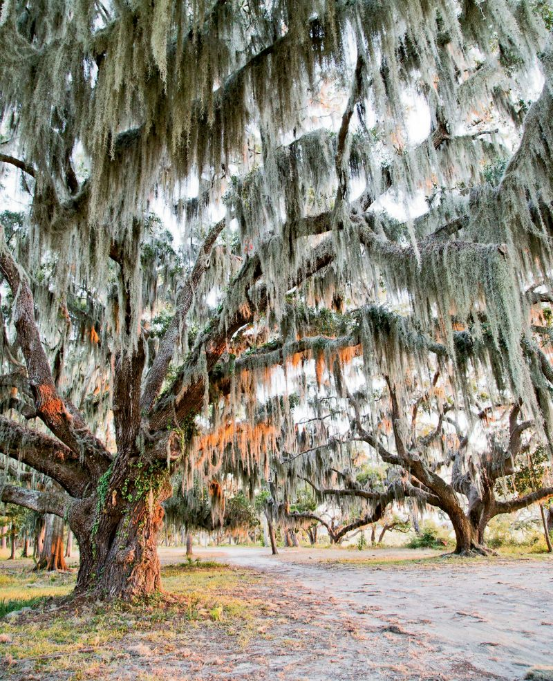 By the 1500s, Spain and France were staking claims along the Port Royal Sound, including the Spanish settlement of Santa Elena on present-day Parris Island. High bluffs and live oak trees are part of the scenery.