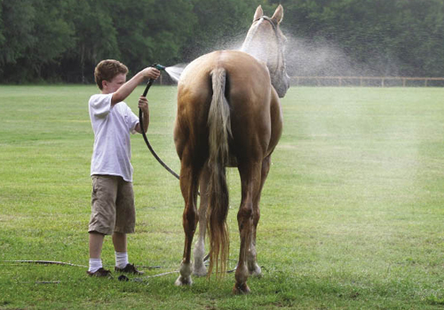 Children—such as Mason Sease who is hosing down his mom's horse, are part of the horse aftercare routine