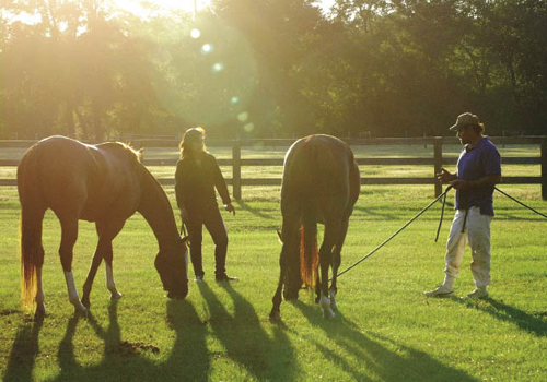 Polo matches bring out friends, family, and other spectators.