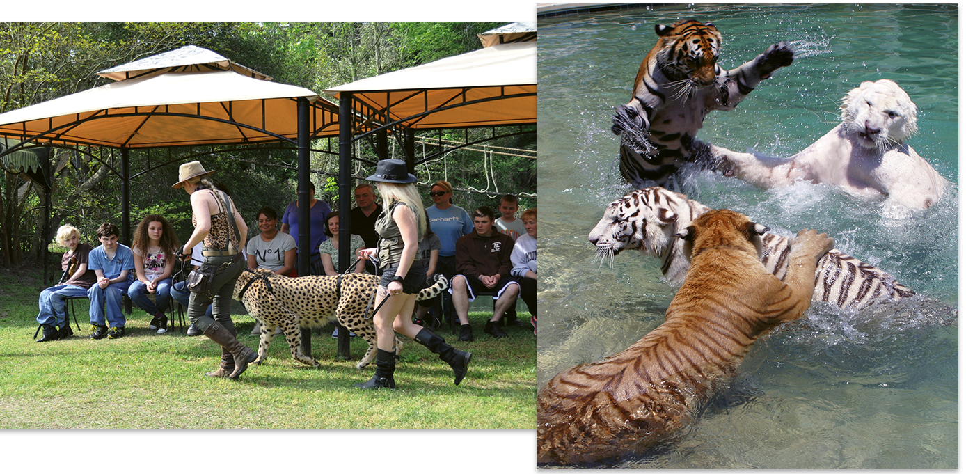 Animal Attractions Myrtle Beach Sc