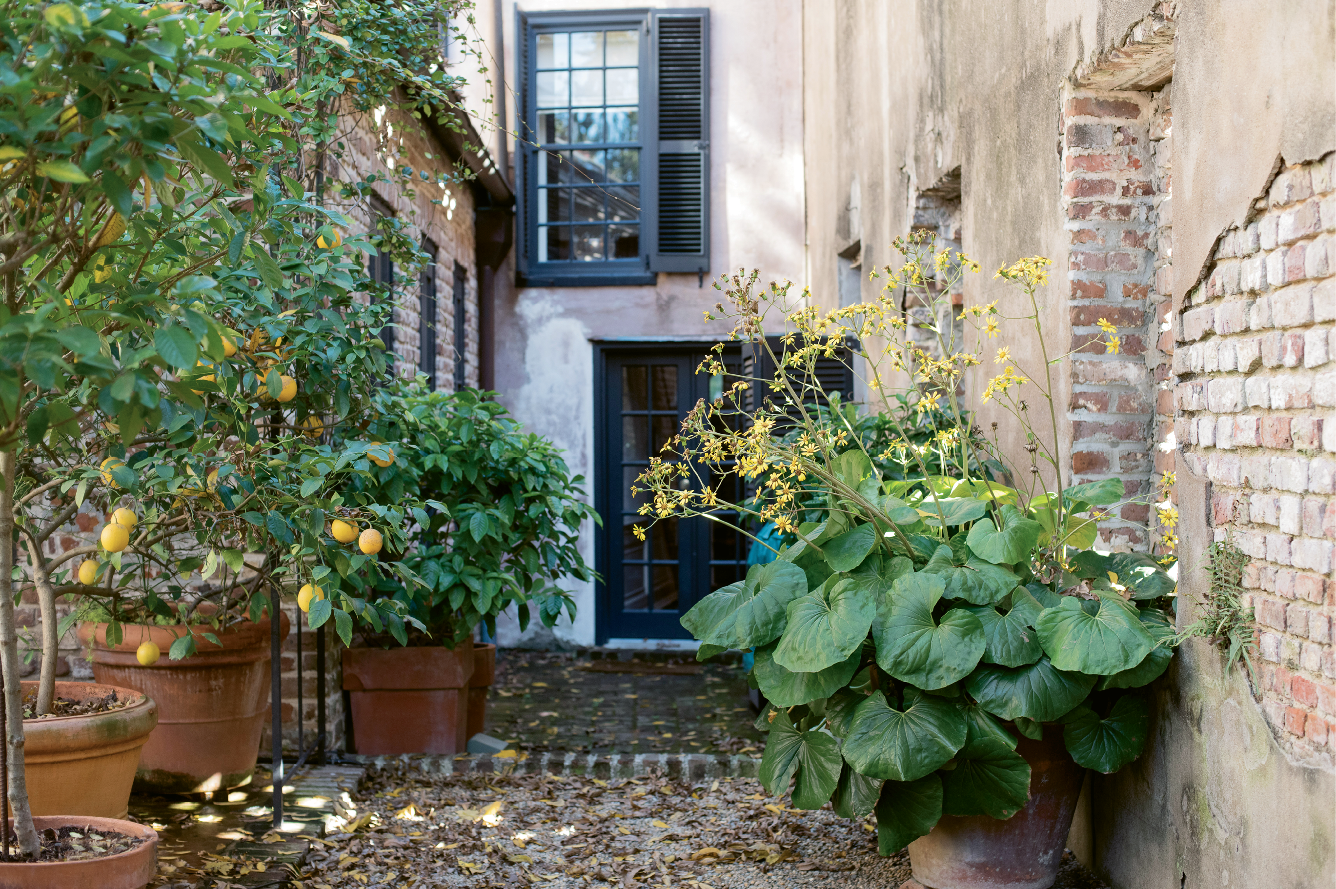 HAVE YOUR GARDEN & EAT IT, TOO: The courtyard garden features citrus trees, such as lemon and tangerine, as well as beehives that yield some 70 pounds of honey per year.