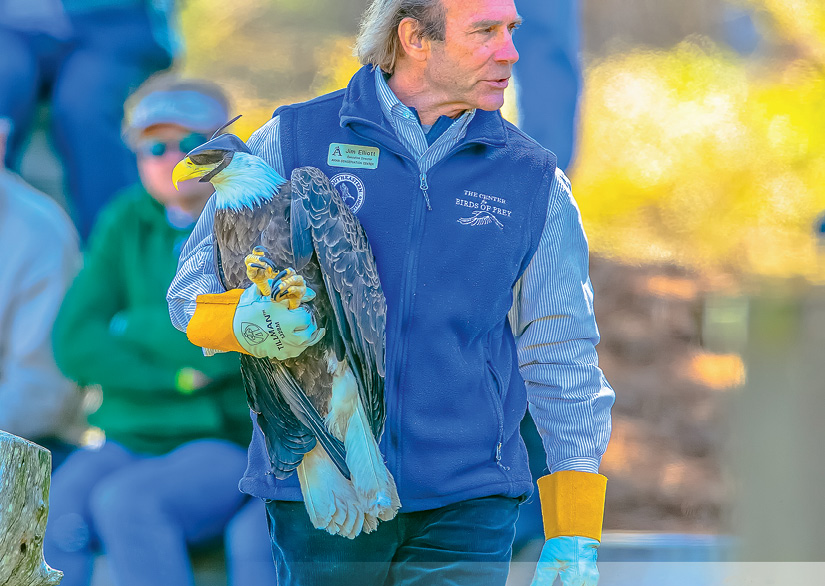Call of the Wild: Jim Elliott, founder of the Center for Birds of Prey, releases a bald eagle that was treated for lead toxicity at the Awendaw facility.