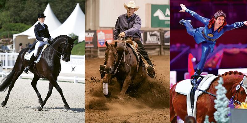 Horse Sports 101 Charleston Sc Charleston Magazine