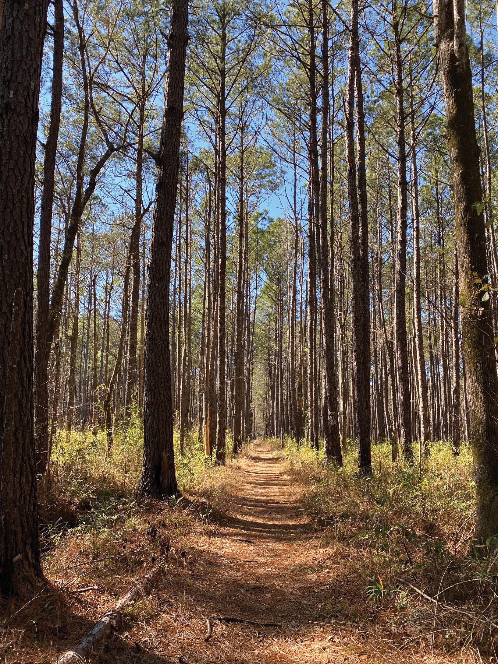 Swamp Fox Passage of the Palmetto Trail