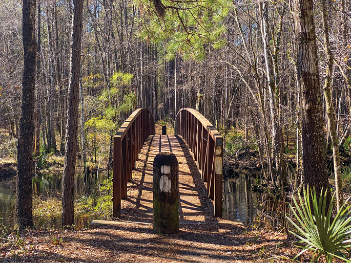 The Swamp Fox Trail passes through diverse ecosystems, including swamps, longleaf pine forests, and grassy savannas. Three trailheads allow hikers to opt for one long trek or shorter day trips.
