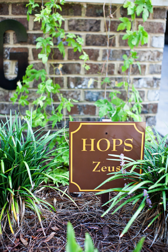 Zeus hop vines grow around the brewery.