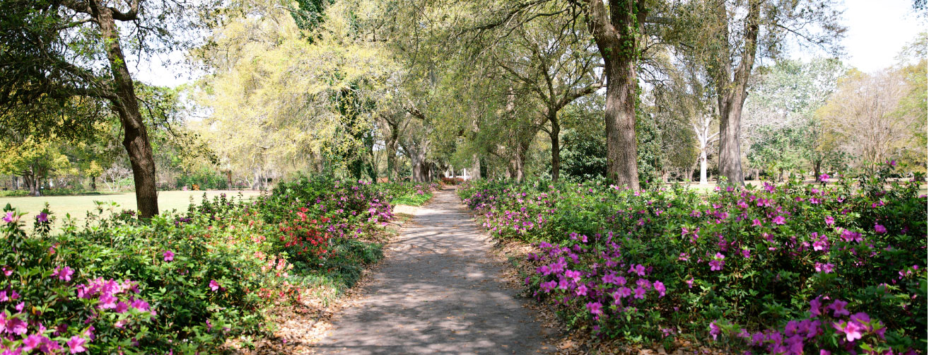 "Potent Pathways: Designed in 1906 by Olmsted's son John Charles, Hampton Park is one of the Messners' favorite Lowcountry spots. ""It just draws you in; the paths invite you to meander and explore, and that's really the essence of a classic Olmsted design,"" says Jenny."