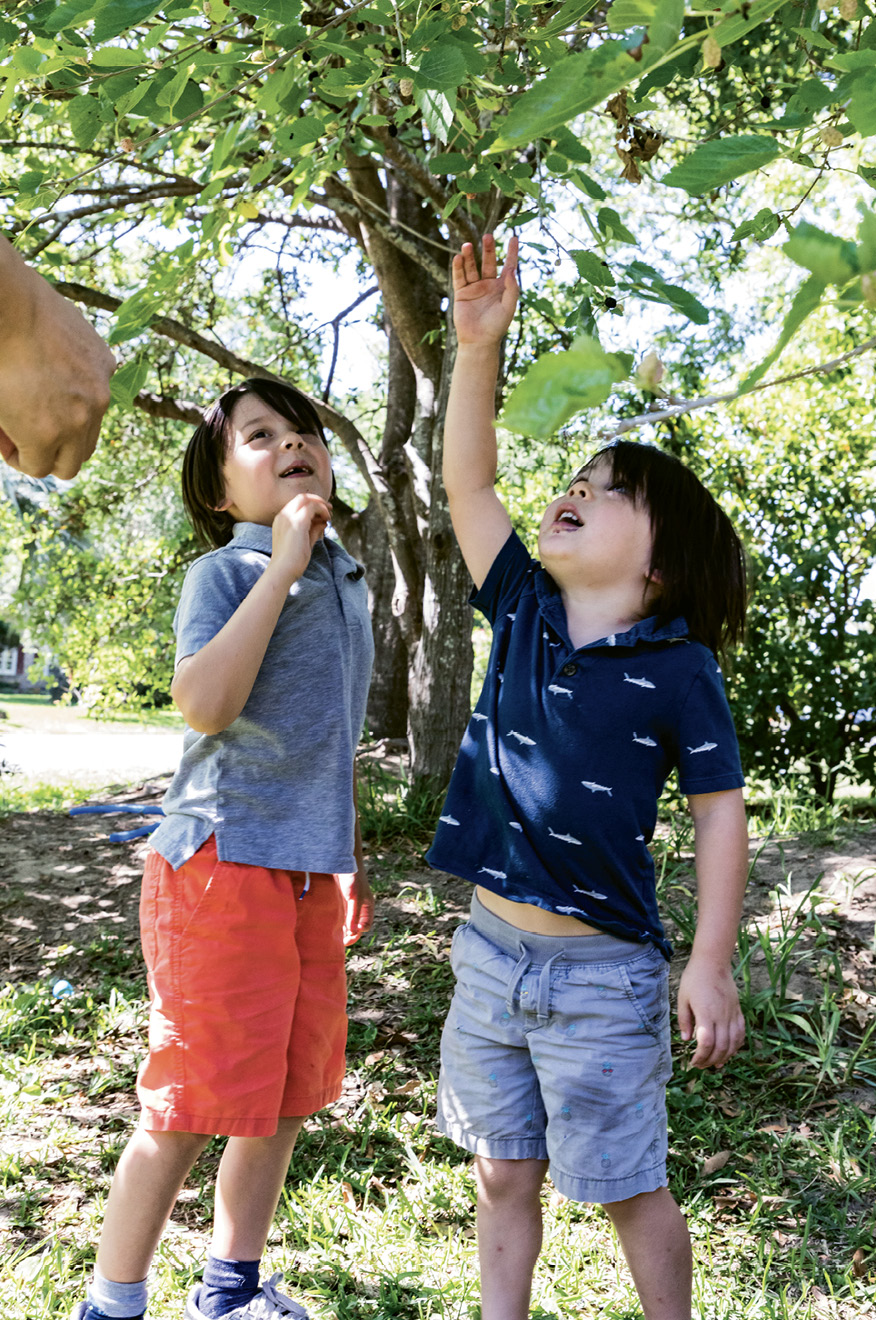 Sonny, six, and Buck, four, help harvest mulberries.