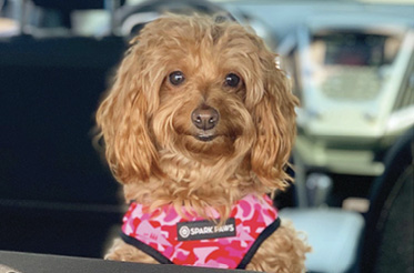 "Welcome Waggin': ""I travel often, so when I get the chance to spend time with my fur baby, Ginger, it's so wonderful."""