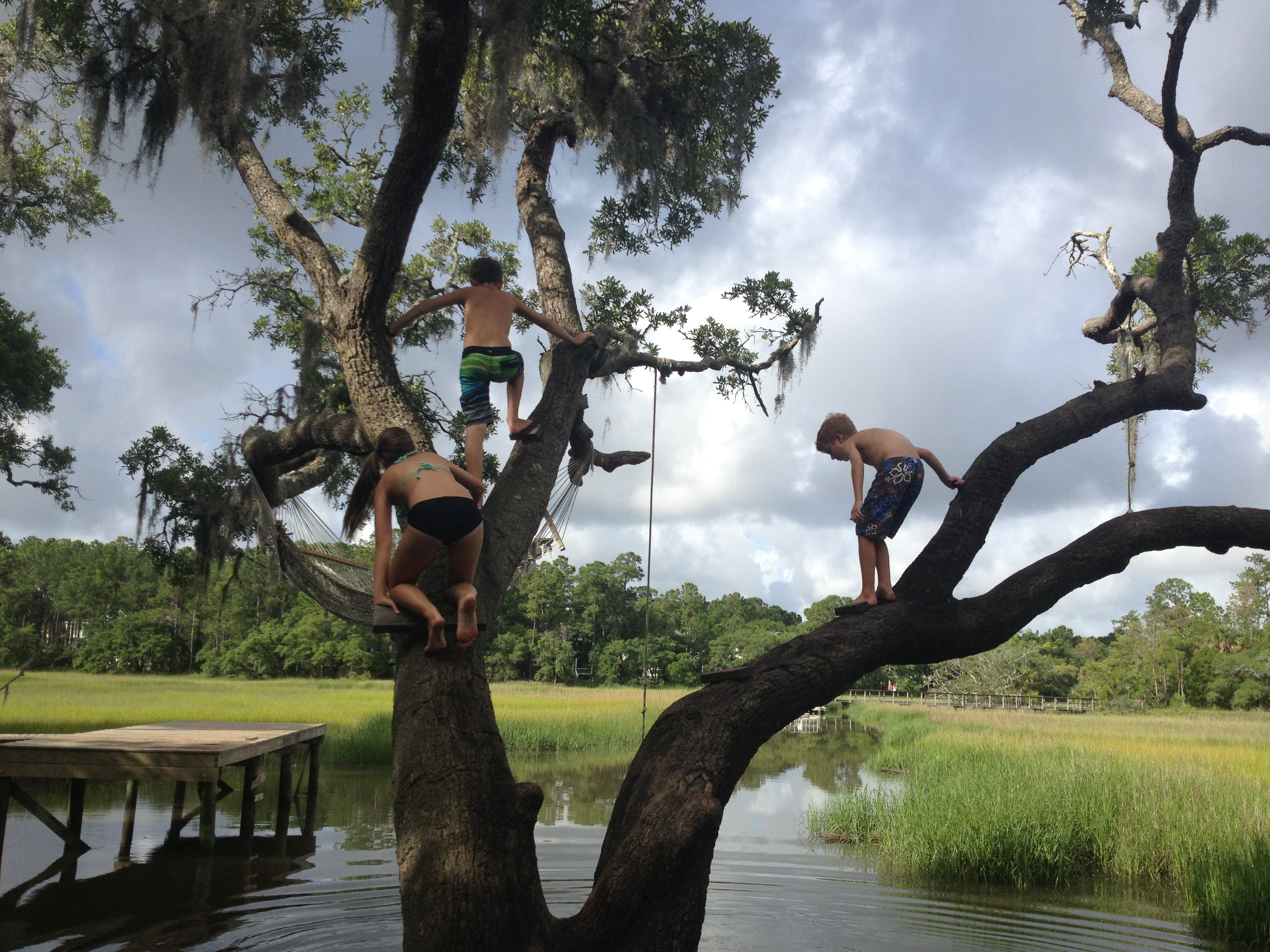 "FINALIST Amateur category: The Giving Tree by Julia Shealy; ""This old tree provided much adventure and fun for kids in my neighborhood.  They build rope swings, hammocks, and used it as a diving board to plunge into the creek below."""