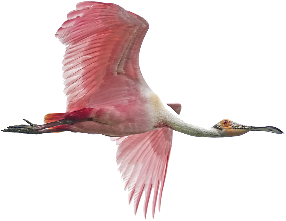 Spy myriad birdlife, such as spoonbills and endangered wood storks, in this network of  rivers, tidal creeks, marshes, and wetlands.