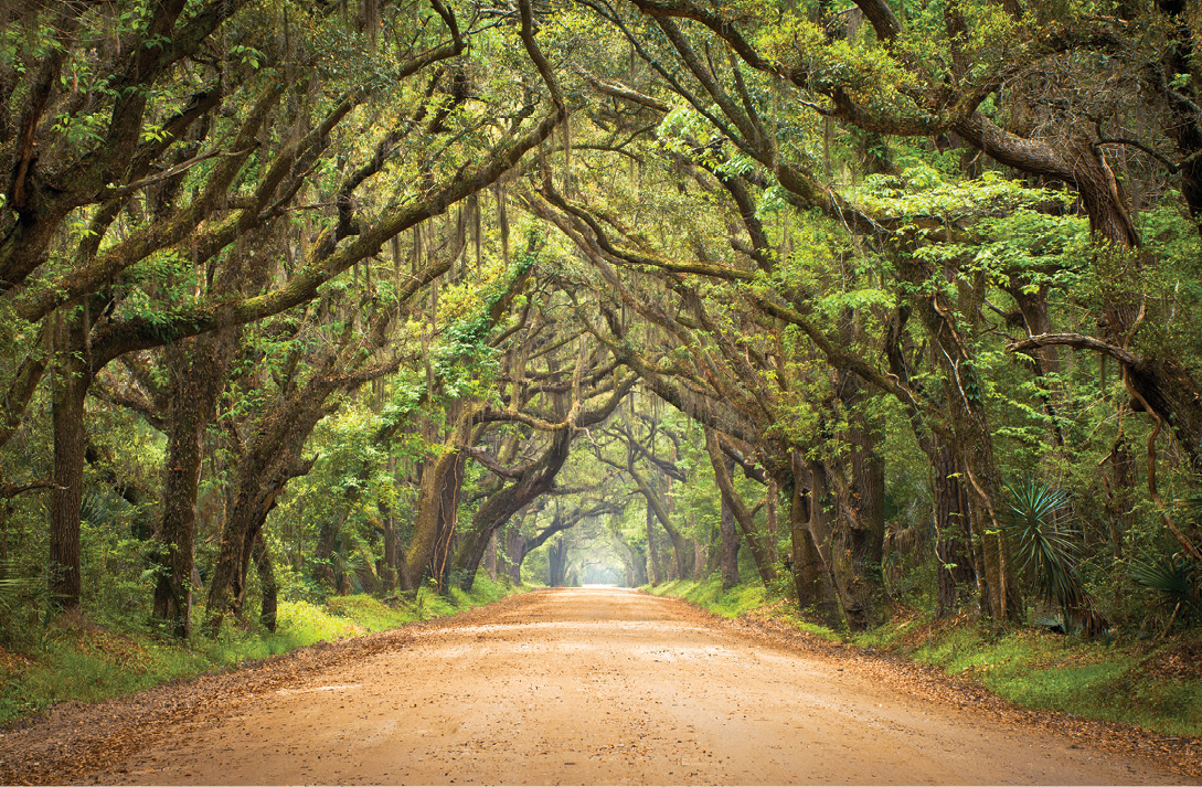 An allée of oaks on Edisto Island's Botany Bay Road leads to the former plantation, now an environmental treasure managed by the South Carolina Department of Natural Resources.