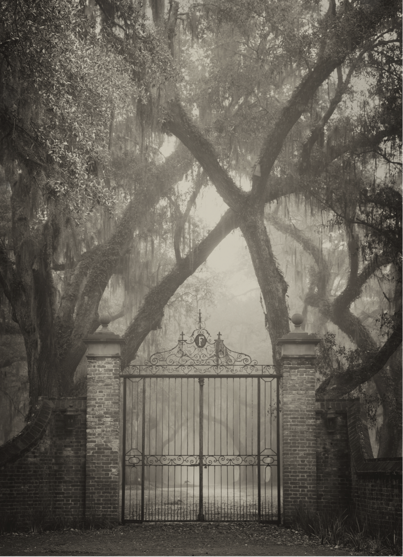The wrought-iron gates at Fenwick Hall, enveloped by old oaks and shrouded in mist.