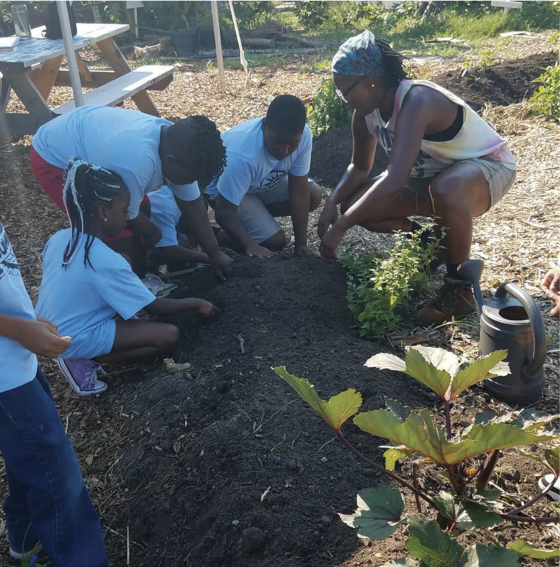 School kids come to Fresh Future Farm to get their hands dirty...