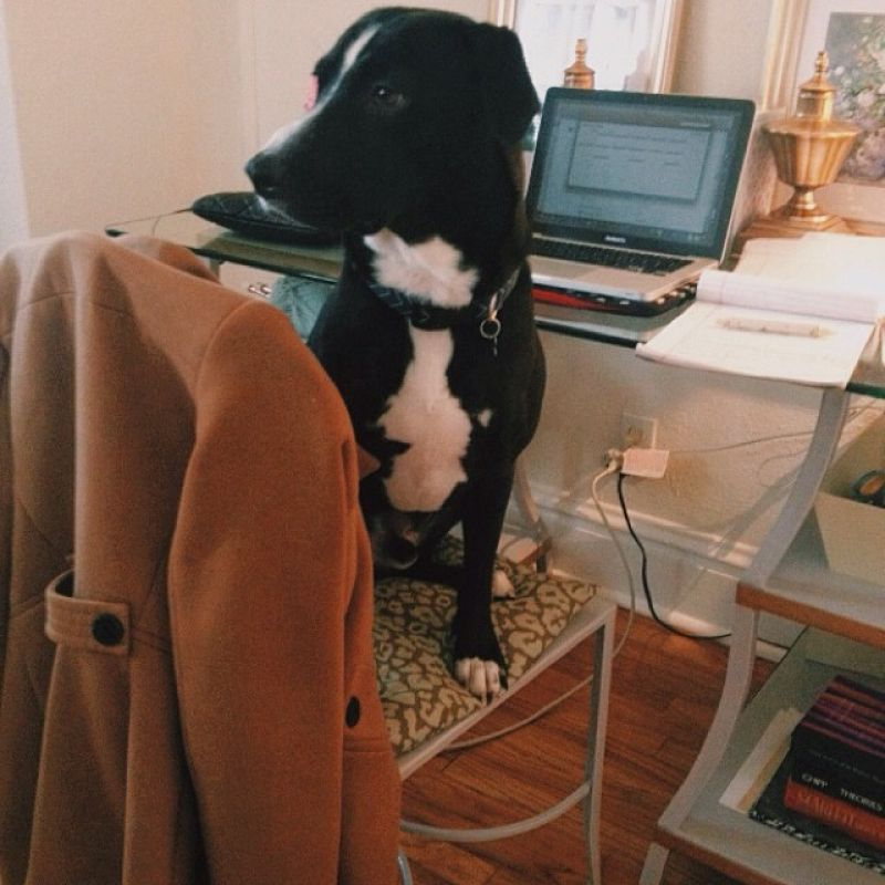 Editor of The Wedding Row & Wedding Row Grand Strand, Andraya Northrup's dog Monte