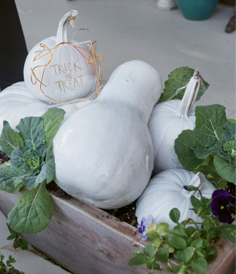 Tuck in pansies and cabbage plants and water generously daily. Too precarious? Try the same method with a garden box.