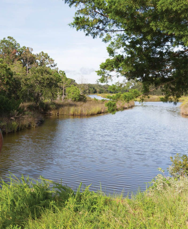 """""""We've had an environmental stewardship vision for this land since purchasing it in 1995."""" —Jeff Snyder, Kiawah River chief environmental officer"""