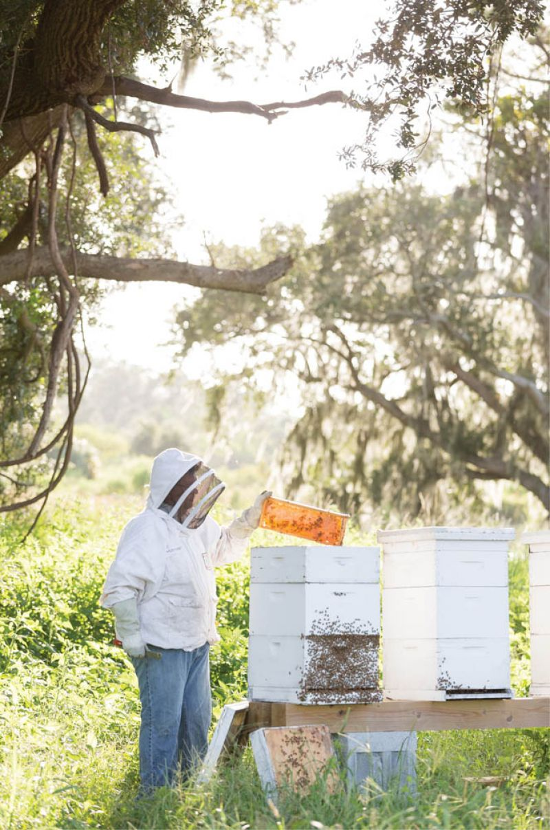 Sweet Buzz: Chuck Hudspeth checks the farm's hives, home to many happy honeybees, thanks to the wide range of native and cultivated pollinator-attracting plants and flowers on the property.