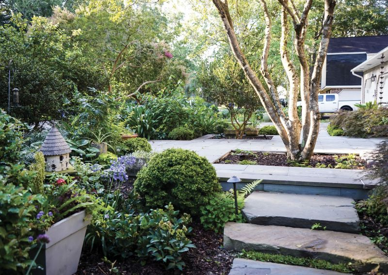 Elevated Entrance: Rivers transformed her front yard with a raised terrace that stretches from her porch toward the street and incorporates a tea olive and sasanqua camellia. A flagstone path accentuates the elevation change, curving among plantings such as (above) agapanthus, which Rivers values more for its strappy leaves than its blue flowers, and hellebores, blooming here in front of a 'Kingsville' boxwood..