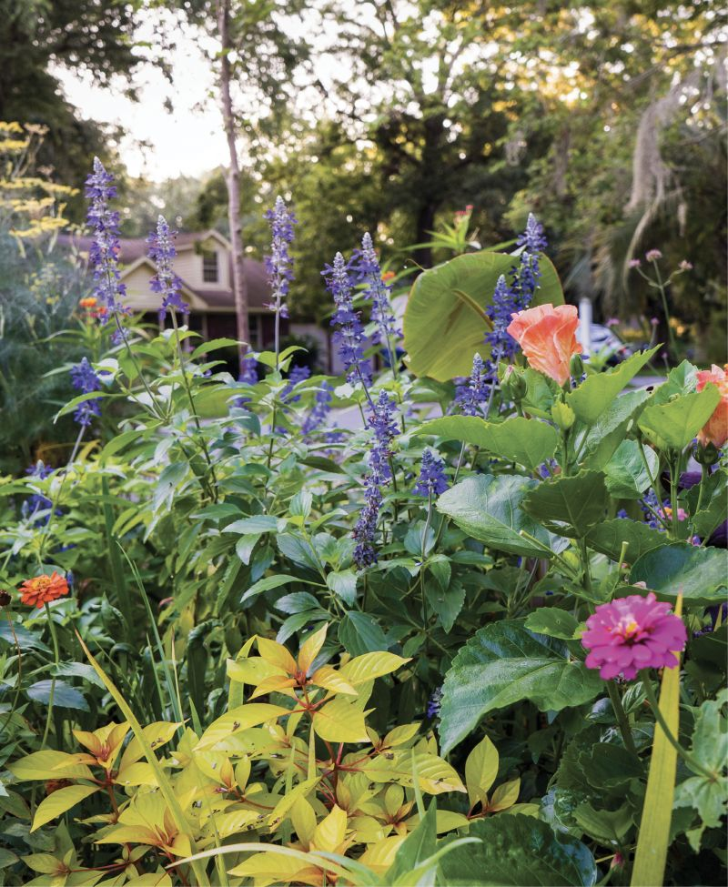 Buzz Worthy: A 'Lime Sizzler' firecracker shrub sets off the deeper-green foliage and bright blooms of bronze fennel, 'Mystic Spires Blue' salvia, zinnias, and hibiscus that attract bees, hummingbirds, and butterflies.