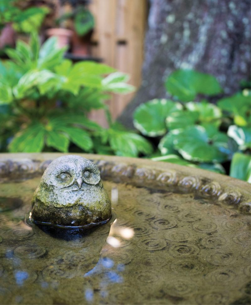 Cool Spot: A stoic owl peers from a birdbath perch.