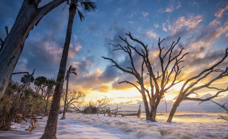 High Tide at Botany: The maritime forest at Botany Bay Plantation