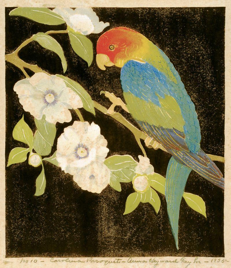Carolina Paroquet (woodblock print on paper, 1935) by Anna Heyward Taylor