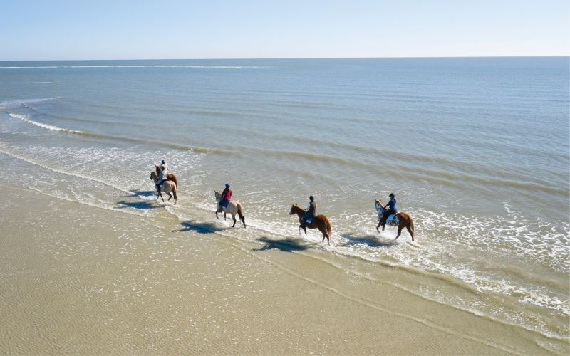 Trotting through the surf at Seabrook Island.