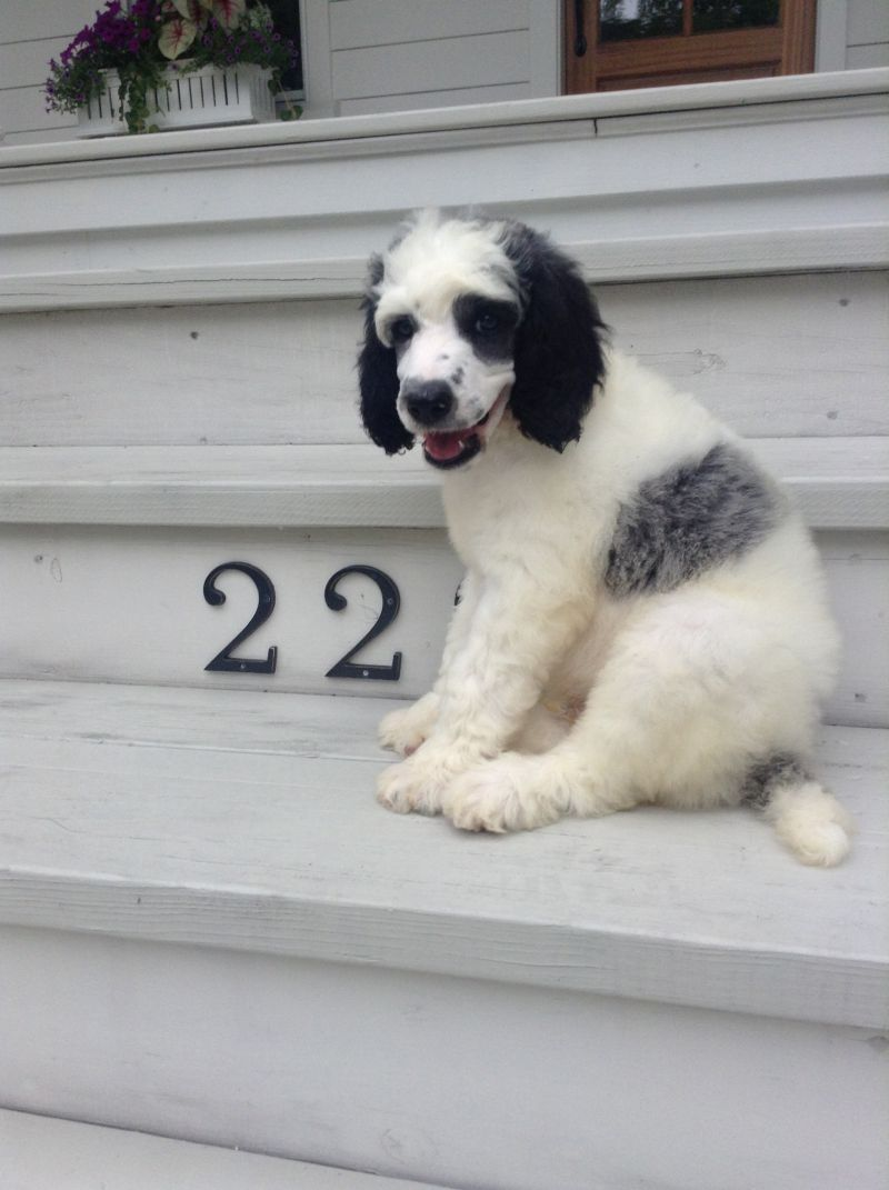 Senior Account Executive, Gene Crim's dog Eych