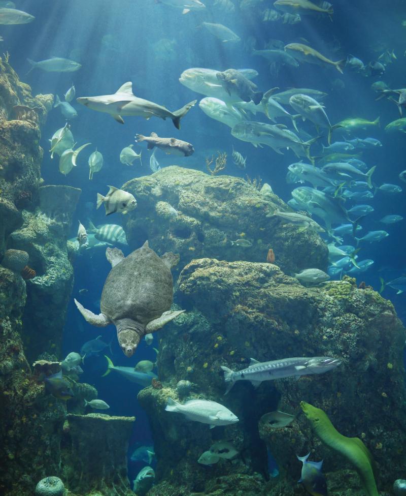 The two-story 385,000-gallon Great Ocean Tank at the South Carolina Aquarium.