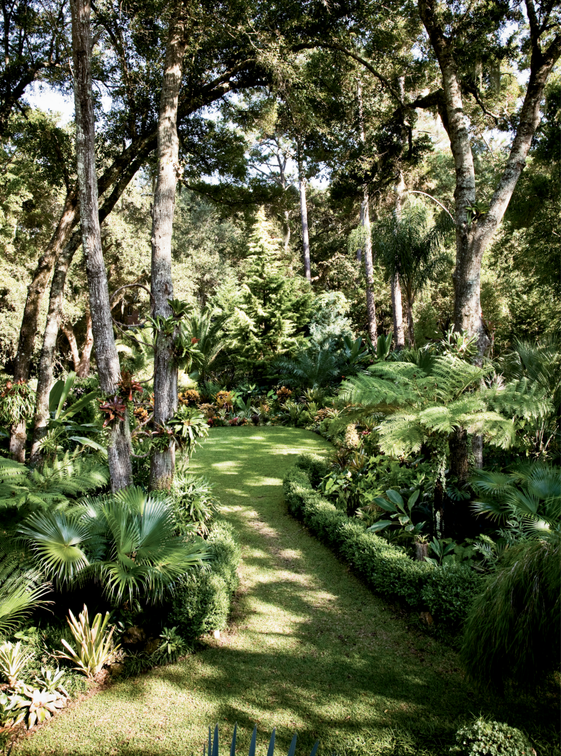 """Some Like It Hot - These green-thumb homeowners cleared a series of cul-de-sac """"rooms"""" in the woods around their home, including a tropical garden filled with heat- and humidity-loving plants. A variety of Australian tree ferns, banana plants, bromeliads, elephant ears, and palms thrive here.  Location: Clearview,  James Island (owned by Alejandro González and Jim Smeal) Issue: April 2011, """"A Cultivated Life"""" Photographer: Peter Frank Edwards"""