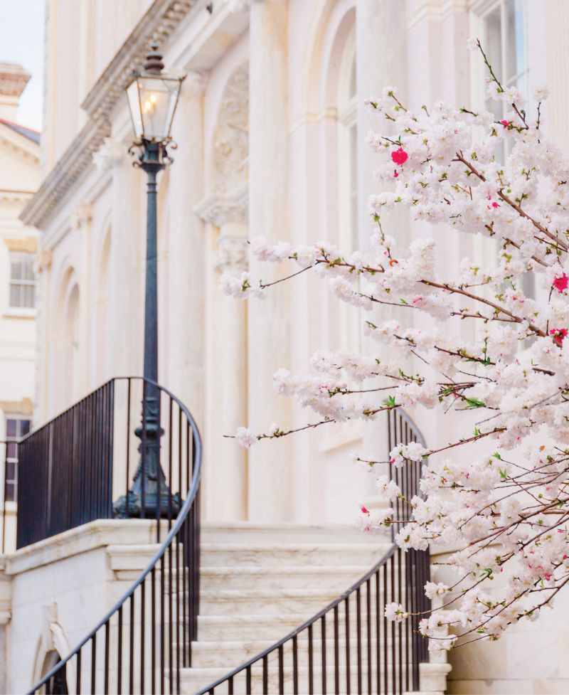 Peachy Keen: A peppermint peach tree in full bloom at City Hall